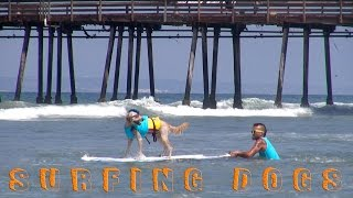 Surfing Dogs - Petco Unleashed