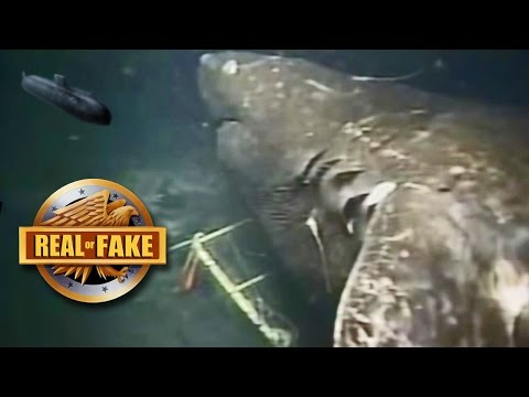 MEGALODON CAUGHT ON CAMERA real or fake