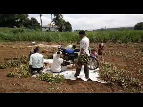 Indian Telent