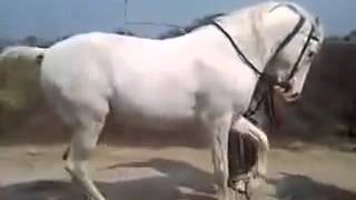 Whatsapp Funny Videos Amazing Horse Dance
