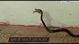 DB Videos snake