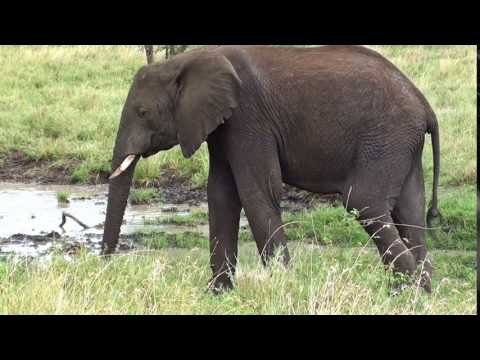 Xxx Mp4 Comedy – Funny – Whats App – Facebook – Elephant Video 999 3gp Sex