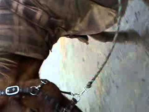 o flash you crazy horse xxx :)