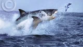 trilha sonora do filme tubarão   um classico do cinema