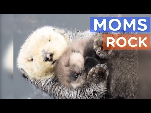 Best Animal Moms Ever Motherly Animals Compilation The Dodo Best Of