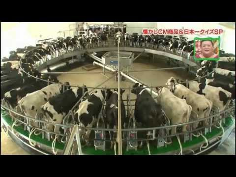 Automatic milking machine of Japan