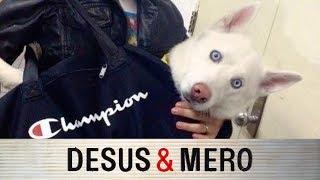 Desus and Mero Debate Subway Dogs