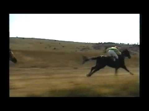 Trka Konja u Delimedje 11.09.2011.god.