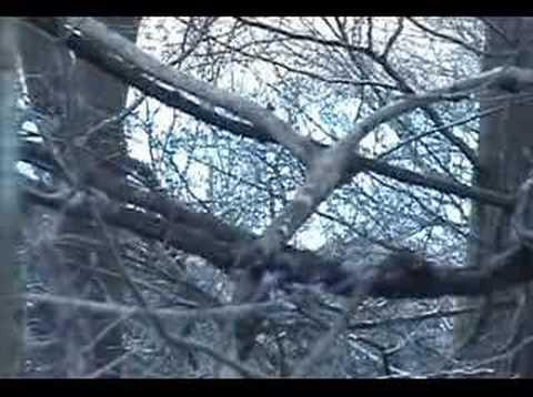 squirrel hunting-1 2007