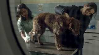 Pedigree 2013 Feeding Brighter Futures Ad: Bad Dog, Good Dog