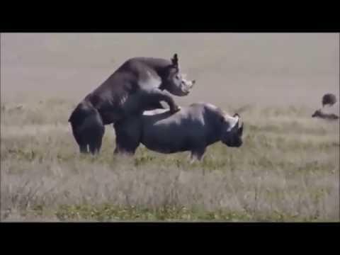 Xxx Mp4 Ndani Ya Safari Ya Serengeti Tanzania Jionee Video Hii Hapa 3gp Sex