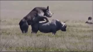 Ndani ya Safari ya serengeti tanzania  Jionee video hii hapa