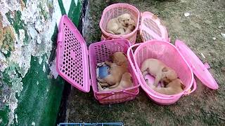 Wholesale Dog Market Part 3 with Phone number and Address