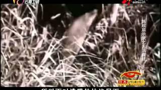 20141128越战启示录:无法自拔