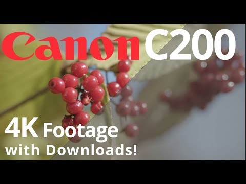Canon C200 4K Sample FOOTAGE with DOWNLOADS 🎥