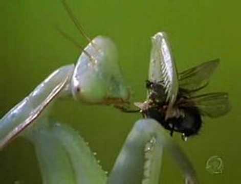 mundo dos insetos