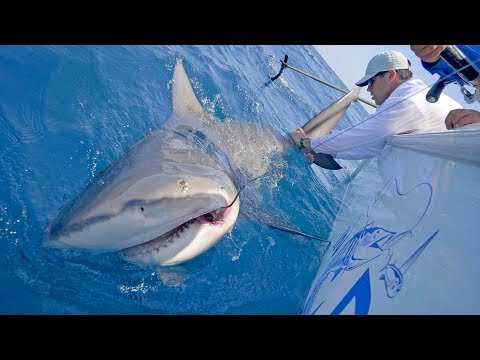 Xxx Mp4 Searching For Wahoo And Monster Shark Fishing With Frogg Toggs 4K 3gp Sex