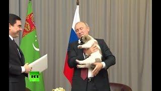 RAW: Turkmen leader presents Putin with Asian shepherd puppy