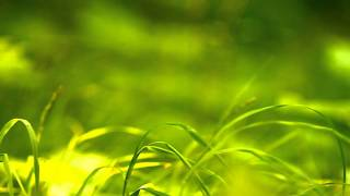 Green nature in HD