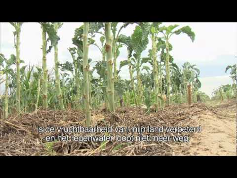 Xxx Mp4 ActionAid Women S Land Rights Zimbabwe 3gp Sex