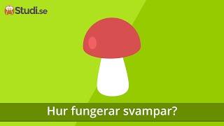 Hur fungerar svampar? (Biologi) - Studi.se