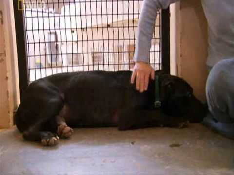 Dog Town part 3 Michael Vick Pitbull Rescue