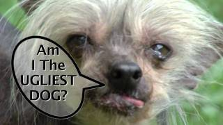 The Comedy Barn's Miss Ellie: Cutest or Ugliest  Dog Facebook Ad