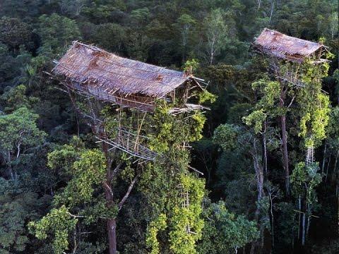 Xxx Mp4 Begini Kehidupan SukuKanibaI Pemakan Manusia Di Pedalaman Papua Keajaiban Dunia Nyata 3gp Sex