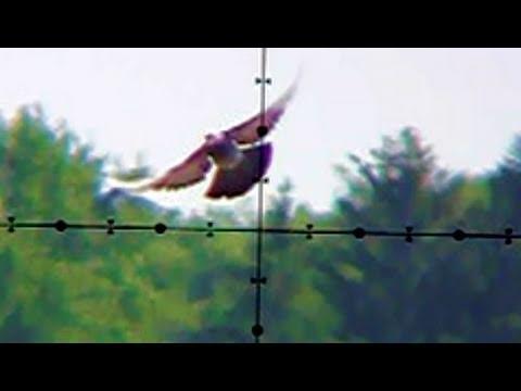 Pigeon Shooting 130 Yards 118m Edgun Matador PCP Air Rifle