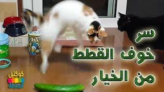 سر خوف وفزع القطط من الخيار !