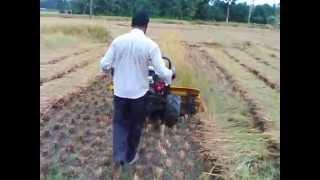 Paddy harvesting machine in Bangladesh /ধান কাটা মেশিন / Rice Reaper Machine/wheat and rice reaper