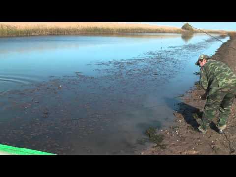 ловля на водоросли видео