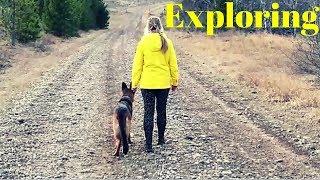 Exploring with our German Shepherd