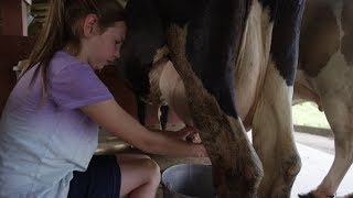 village woman How to Milk a Cow by Hand Video