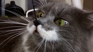 Mustache Cat in Slow Motion