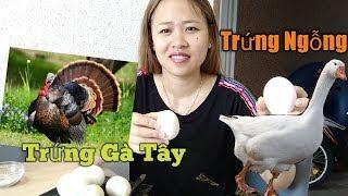 Bà Bầu Ăn Trứng Ngỗng  Lần Đầu Ăn Thử Trứng Gà Tây, Trứng Vịt Xiêm//Cuộc Sống Ukraina
