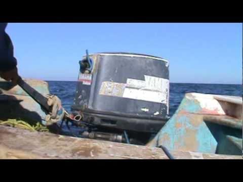 Buceo extremo de callo en Bahia de Kino.