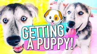 Getting a puppy surprise!! (Early Christmas Present!)