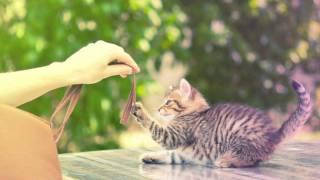Mew - Vaccine (Eskmo Remix) [FREE DOWNLOAD]