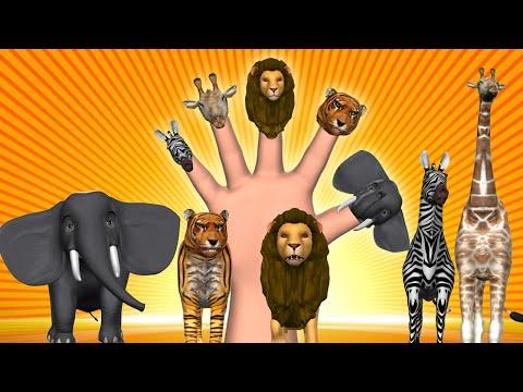 Animal Finger Family Finger Family Song 3D Animation Nursery Rhymes & Songs for Children