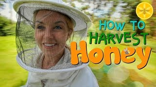 How to Harvest Honey!   Beekeeping with Maddie #12