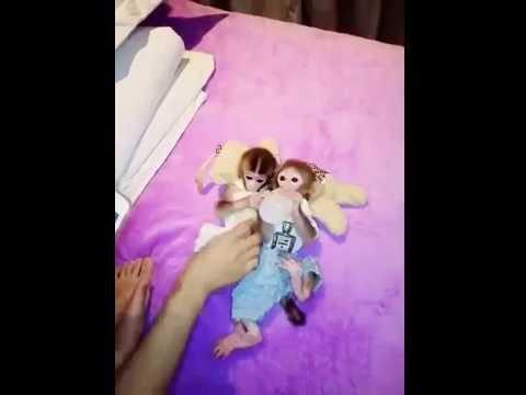Xxx Mp4 Funny Monkey Fuck Video Ever Seen 3gp Sex