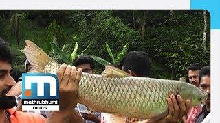 James Scripts Success In Fresh Water Fish Farming | Mathrubhumi News