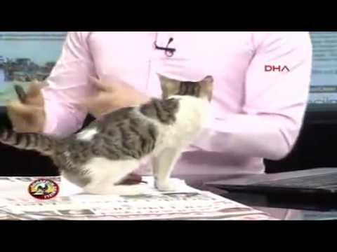 Canlı Yayını Basan Kedi - DRT Denizli TV