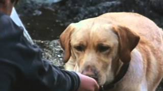 Far From Home: The Adventures Of Yellow Dog Trailer 1994