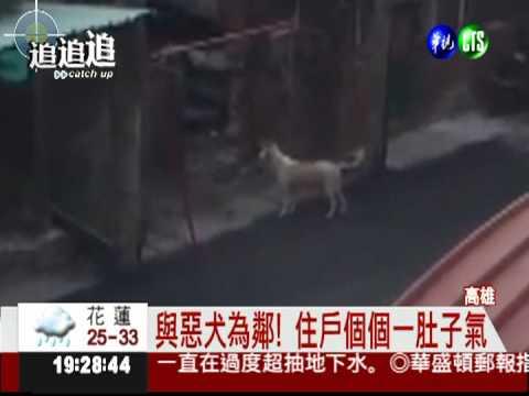 惡鄰縱狗追人 機車族嚇得險摔車