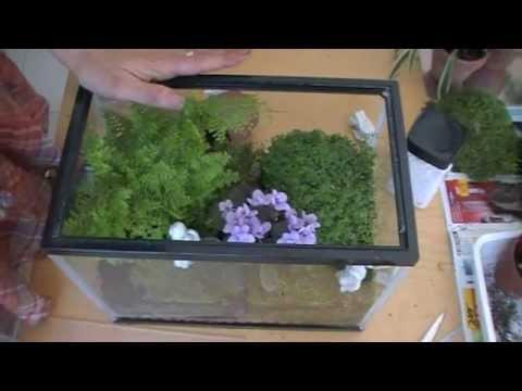 Como hacer un terrario. how to make a terrarium. EcoDaisy.