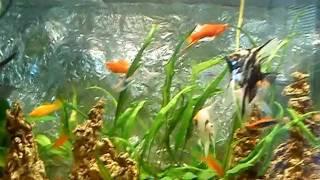Ribi vo akvarium