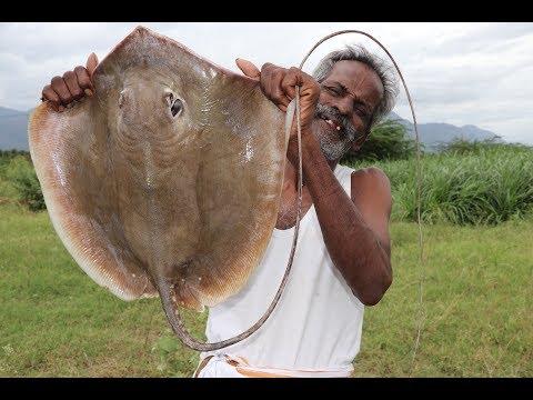 Xxx Mp4 STINGRAY South Indian Authentic STINGRAY Fish Kulambu Prepared By My DADDY Village Food Factory 3gp Sex