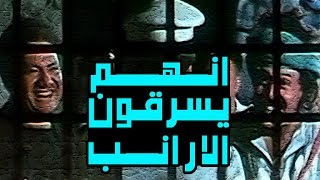 انهم يسرقون الارانب - Enahom Yasrqon El Aranb